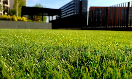 Když je dobrá péče o trávník, vypadá nějak takto.
