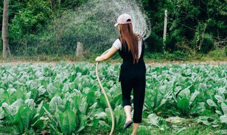 Mladá dívka provádí zavlažování zahrady.